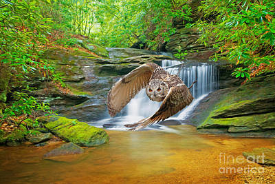 North Georgia Mountains Photograph - Horned Owl On The Prowl by Laura D Young
