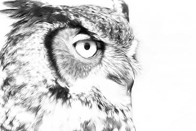 Photograph - Horned Owl Pen And Ink by Steve McKinzie