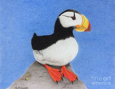 Puffin Drawing - Horned Puffin  by George Sonner