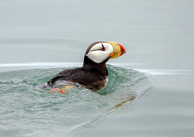 Print featuring the photograph Horned Puffin by Phil Stone