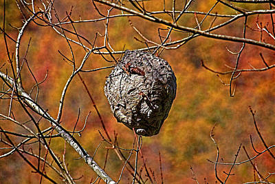 Photograph - Hornet's Nest by HH Photography of Florida