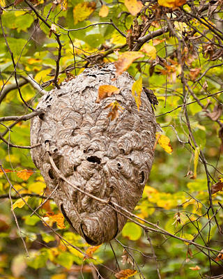 Photograph - Hornets Nest by Kerri Farley
