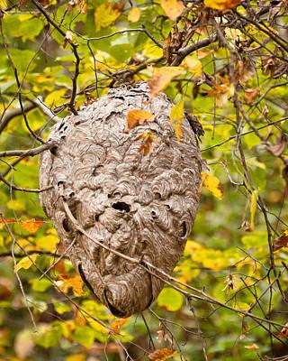 Photograph - Hornets Nest by Kerri Farley
