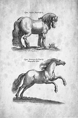 Horse 03 Historiae Naturalis 1657 Art Print by Aged Pixel