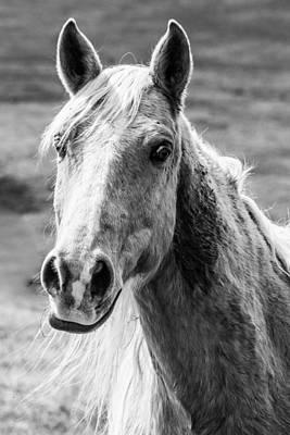 Photograph - White Horse 1 by Karen Saunders