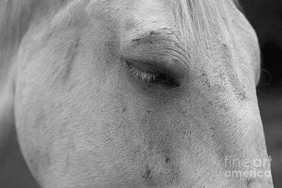 Photograph - A Horse Portrait 1 by Lara Morrison