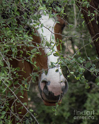 Photograph - Horse 12 by Christy Garavetto