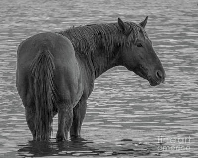 Photograph - Horse 14 by Christy Garavetto