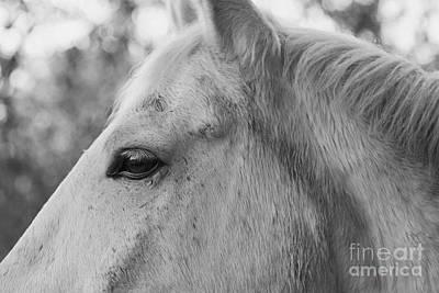 Photograph - A Horse Portrait 3 by Lara Morrison