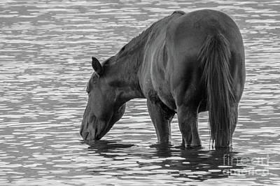 Horse 5 Art Print
