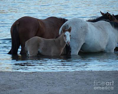 Horse 9 Art Print