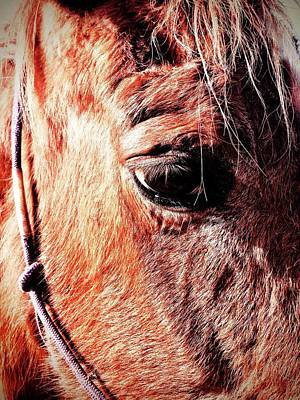 Photograph - Horse  by Alexis Lee Scott
