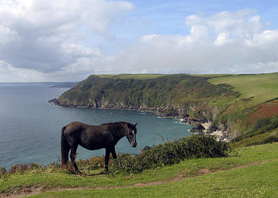 Photograph - Horse Along Coastal Path Cornwall by Kurt Van Wagner