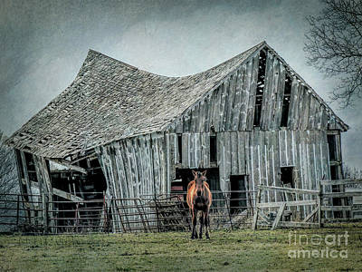 Photograph - Horse And Barn by Lynn Sprowl