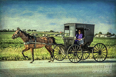 Photograph - Horse And Buggy by Lynn Sprowl