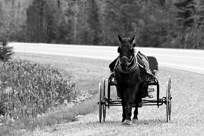 Photograph - Horse And Buggy by Marjorie Imbeau