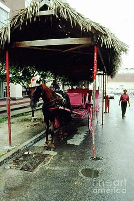 Photograph - Horse And Carriage by Gary Wonning