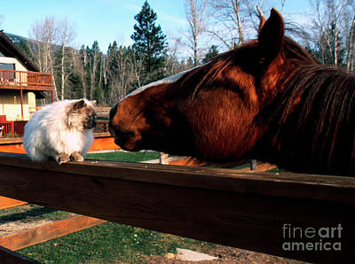Best Friend Photograph - Horse And Cat Nuzzle by Thomas R Fletcher
