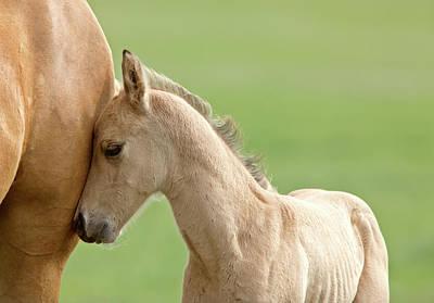 Animal Tracks Digital Art - Horse And Colt by Mark Duffy
