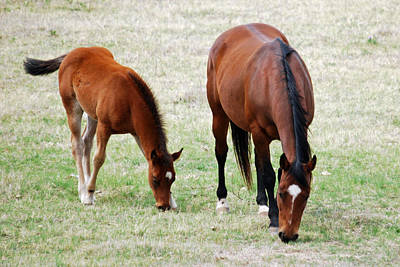 Photograph - Horse And Colt by Teresa Blanton