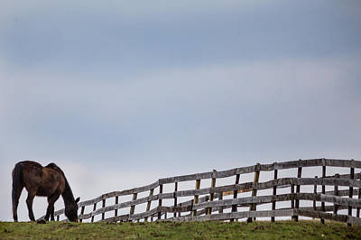 Photograph - Horse And Fence by Karen Saunders
