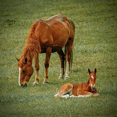 Animal Photograph - Horse And Foal by Oksana Ariskina