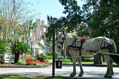 Horse And Jekyll Lsland Club Hotel Art Print by Bruce Gourley