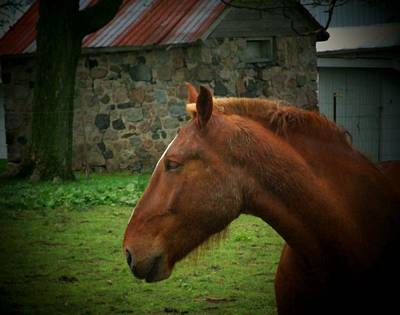 Horse And Shed Art Print by Michael L Kimble