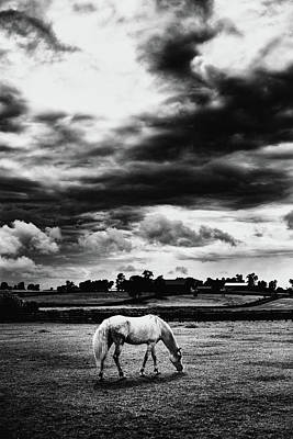 Kentucky Photograph - Horse And Sky by Shane Holsclaw