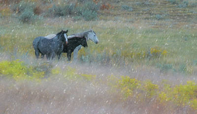 Photograph - Horse And Sleet  by Kelly Marquardt