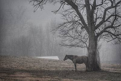 Horse And Tree Art Print by Sumoflam Photography