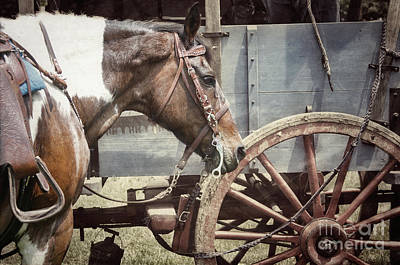 Photograph - Horse And Wheel by Steven Digman
