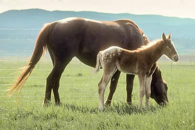 Photograph - Horse Appaloosa On Pasture by John Brink
