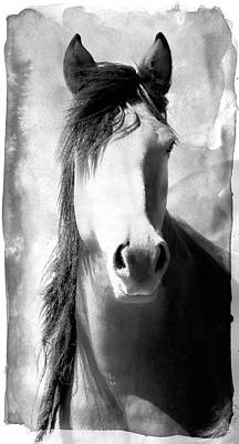 Photograph - Horse Art by Athena Mckinzie