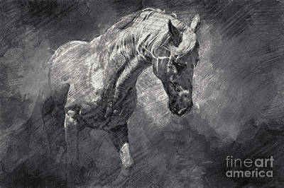 Drawing - Horse Art Drawing by Dimitar Hristov