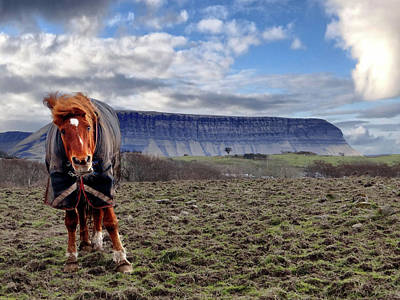 Digital Art - Horse At Benbulben In A Winter Coat Doing An Impression Of Elvis by John Carver