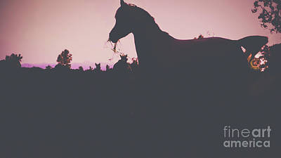 Photograph - Horse At Sunset  by Peggy Franz