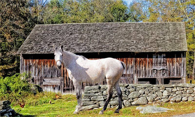 Photograph - Horse At The Barn by Ericamaxine Price