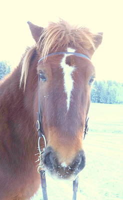 Photograph - Horses Use Complex Facial Expressions Nearly Identical To Humans  by Hilde Widerberg