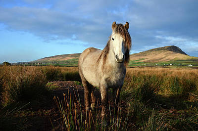 Photograph - Horse by Barbara Walsh