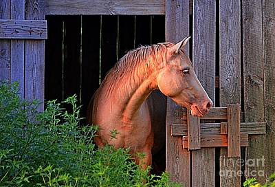 Photograph - Horse Barn by Debbie Portwood