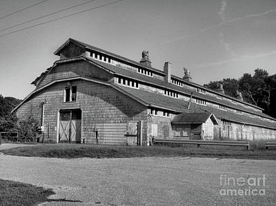 Photograph - Horse Barn Exited by Vickie Johnson
