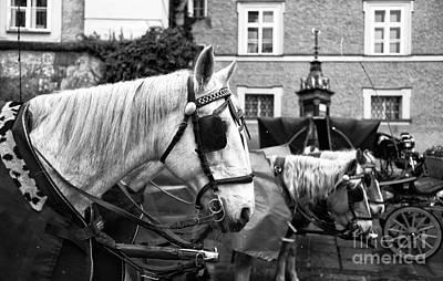 Horse Blinders  Art Print
