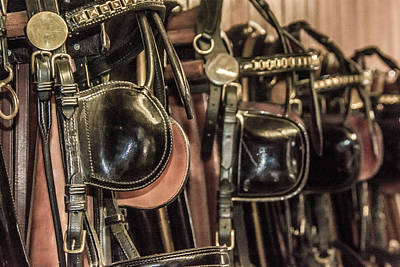 Photograph - Horse Bridle by Pamela Williams