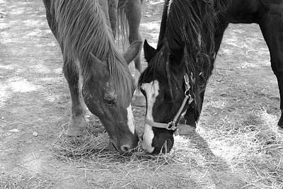 Animal Photograph - Horse Buddies by Angela Murdock