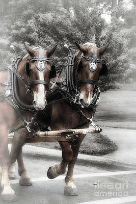 Horse Buddies  Art Print by Steven Digman