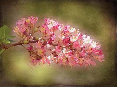 Photograph - Horse Chestnut Branch by Leslie Montgomery