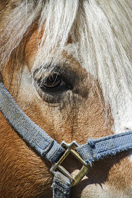 Photograph - Horse Close Up by Bob Slitzan