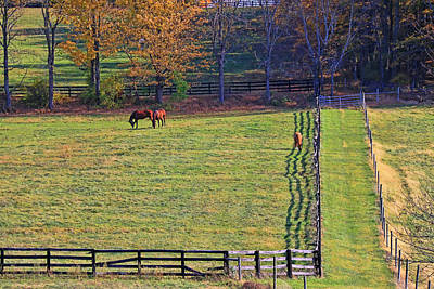 Photograph - Horse Country # 2 by Allen Beatty