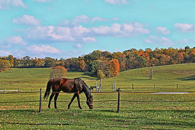 Photograph - Horse Country by Allen Beatty